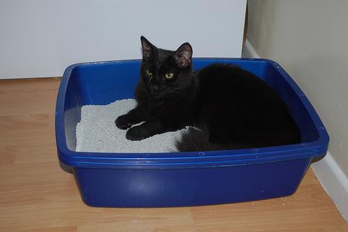будет стоить тайота имя для котенка Бесплатно Многие товары